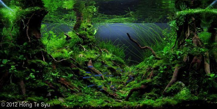 2012 AGA Aquascaping Contest - Entry #273 | Aquascape ...