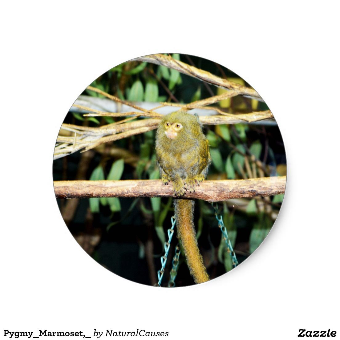 Pygmy_Marmoset,_ Round Sticker