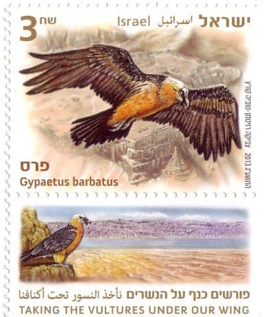 Israel-El Quebrantahuesos,es un buitre notablemente distinto de otras aves de presa parecidas. Recibe su nombre por su costumbre de remontar huesos y caparazones hasta grandes alturas para soltarlos, partirlos contra las rocas y poder ingerirlos para alimentarse.
