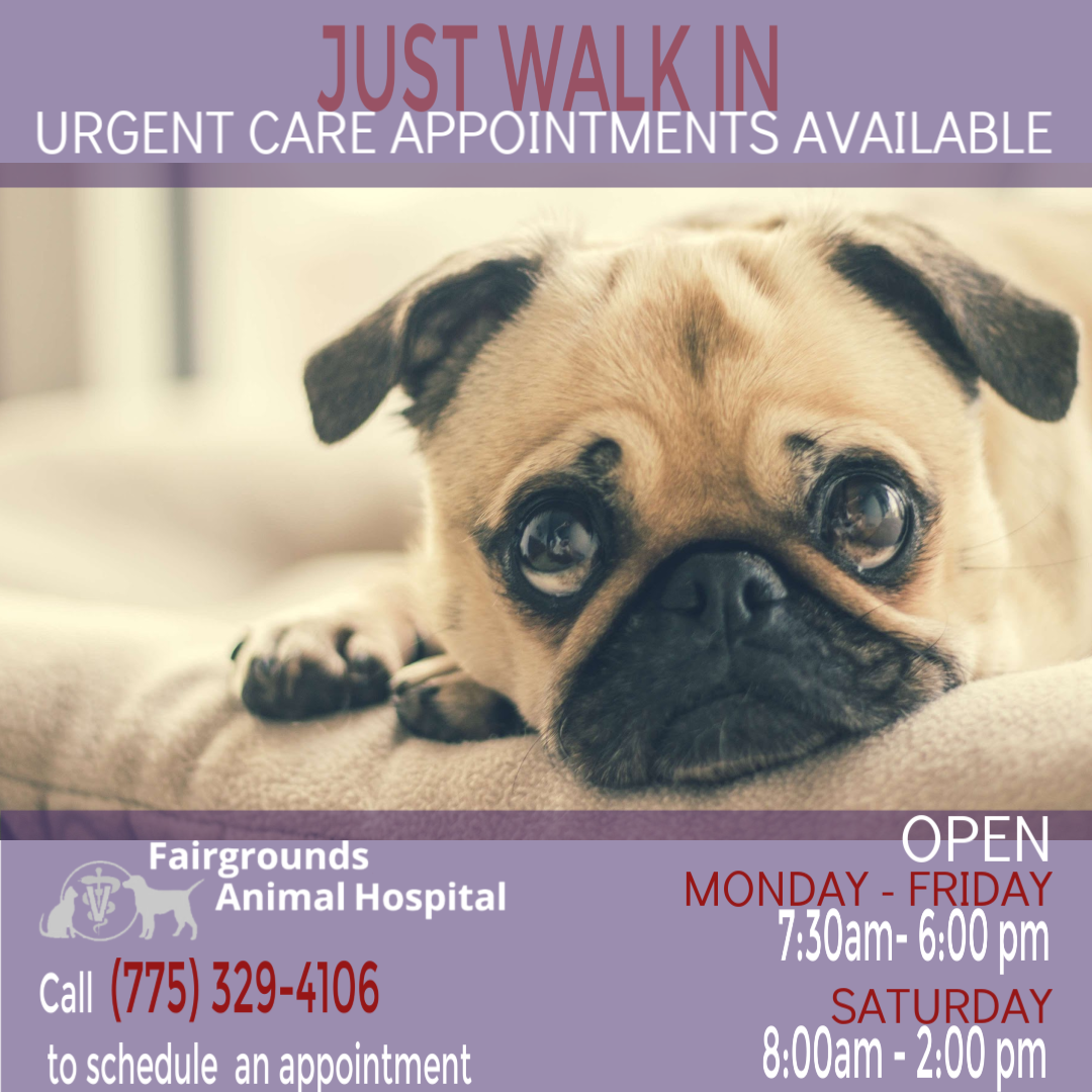 Pin By Fairgrounds Animal Hospital On Pet Health And Wellness Veterinary Care Urgent Care Pet Health