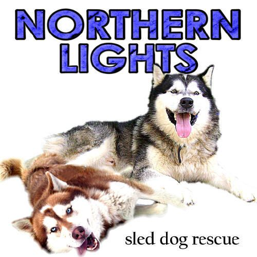Get To Know Northern Lights Sled Dog Rescue Siberian Husky