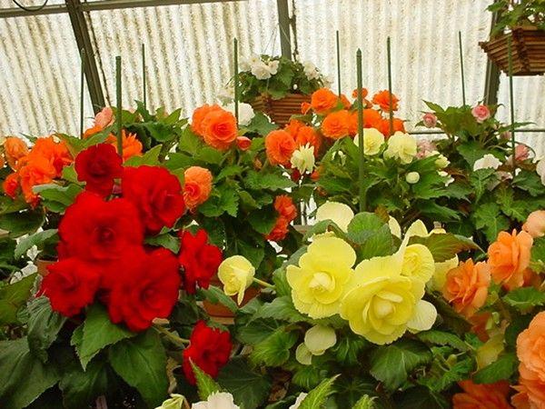 White Flower Farm In Morris Ct Very Near Litchfield Is A Fabulous