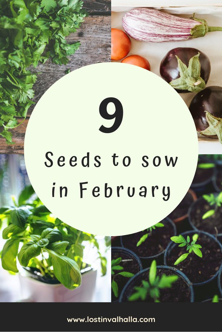 9 veggies & herbs you can plant in February