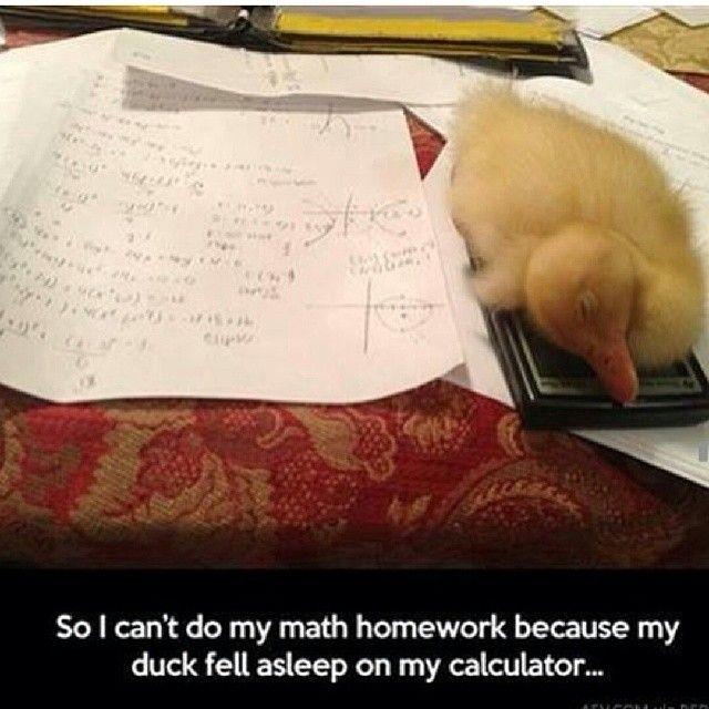 Mathjoke Haha Humor Math Meme Joke Pic Mathmeme Funnypics Duck Calculator Cute Homework Graphing Algebra2 Cute Funny Animals Funny Animals Funny Pictures
