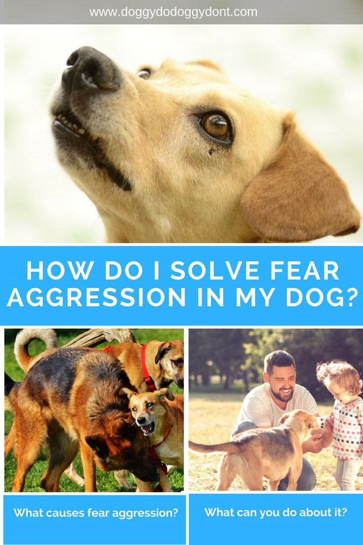 How To Help A Scared Dog Fearful Dog Aggression Enrichment For