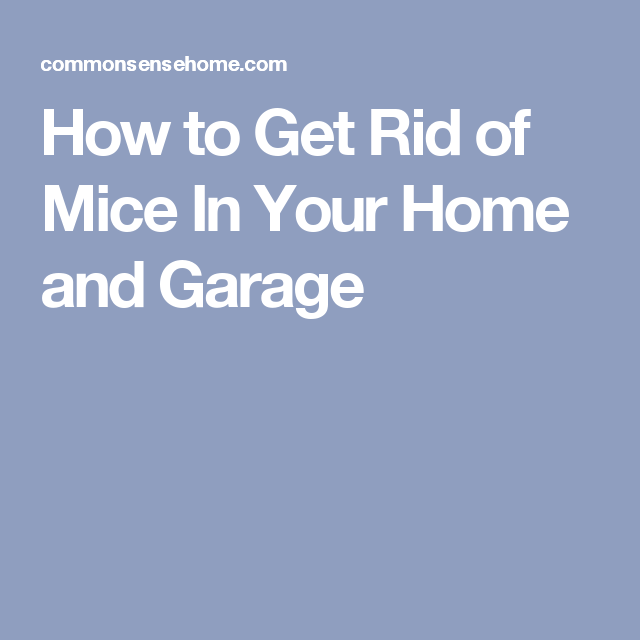 The best ways get rid of mice in your house and garage mice how to get rid of mice in your home and garage ccuart Image collections