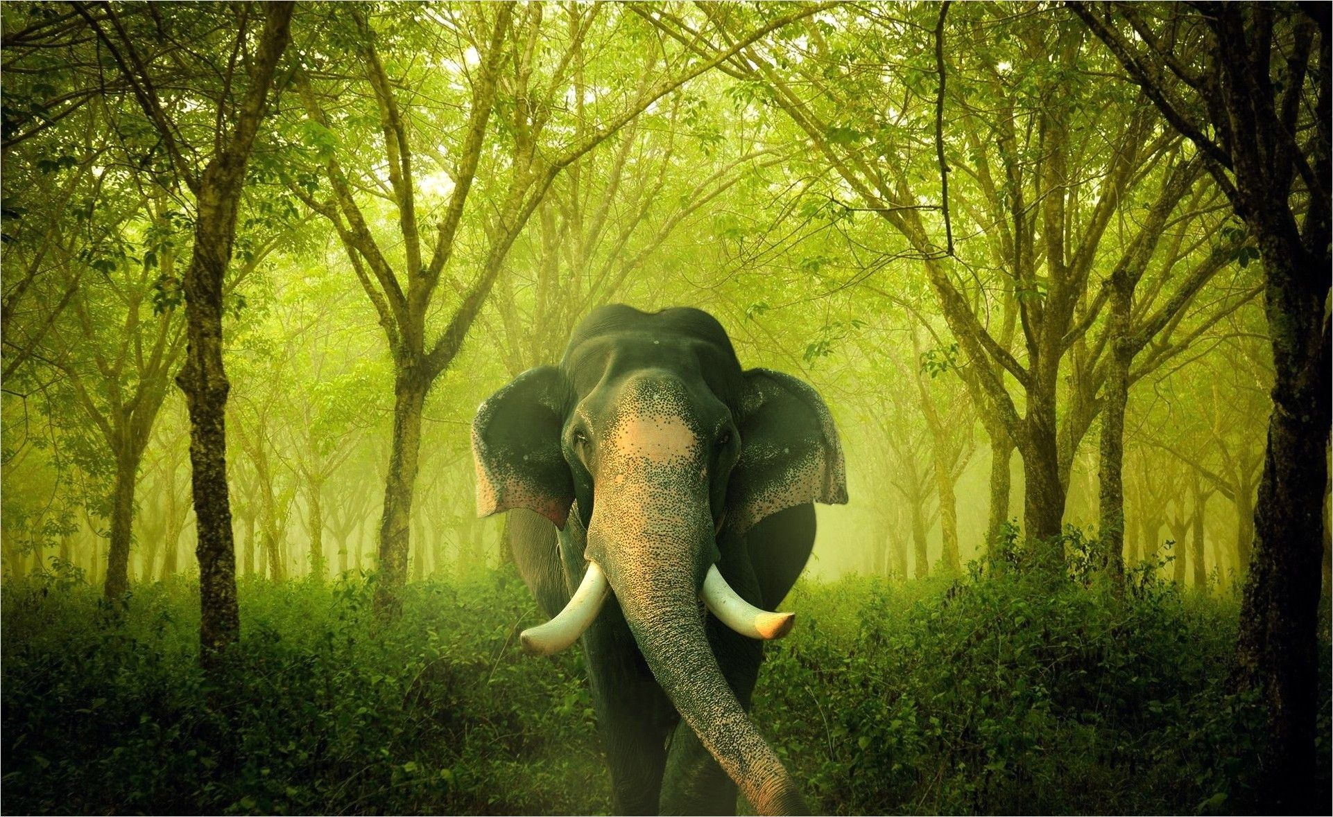 Kerala Elephant Wallpaper Hd 4k - Top Wallpaper HD