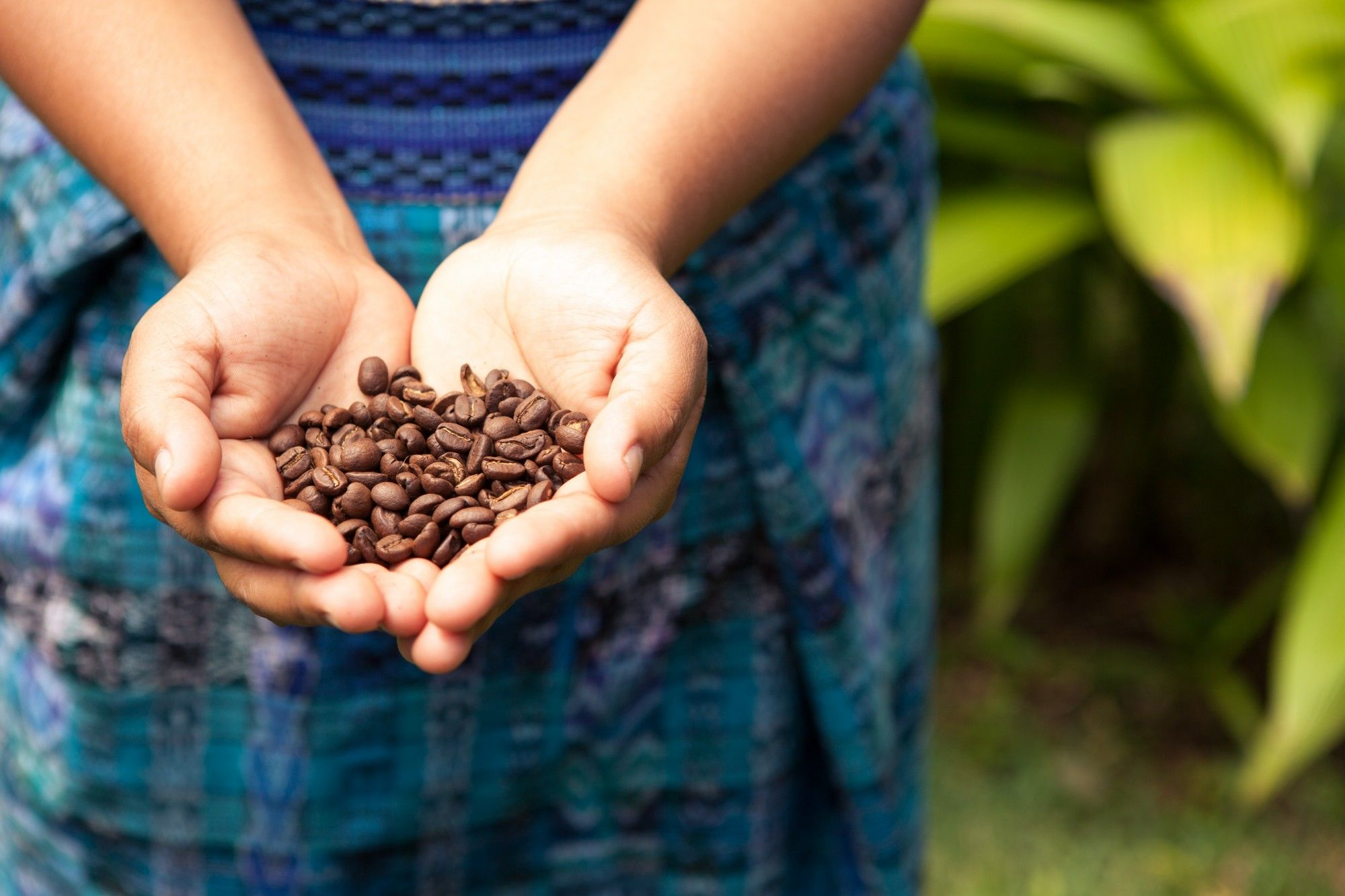 Coffee Grades How Coffee Is Sorted By Size Organic Coffee Beans Coffee Plant Organic Coffee