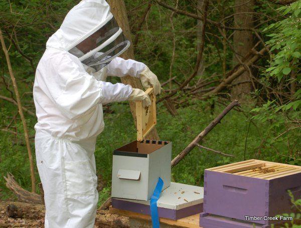 How to Start Beekeeping in Your Backyard   Honey bee ...