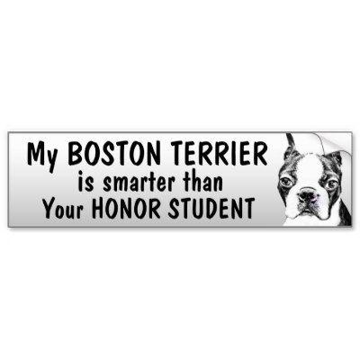 Boston terrier smarter than student funny bumper sticker