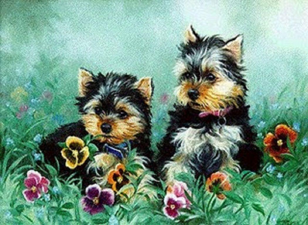 Yorkie Puppies Wallpaper Wallpapersafari Yorkie Puppy Wallpaper Yorkie Puppy