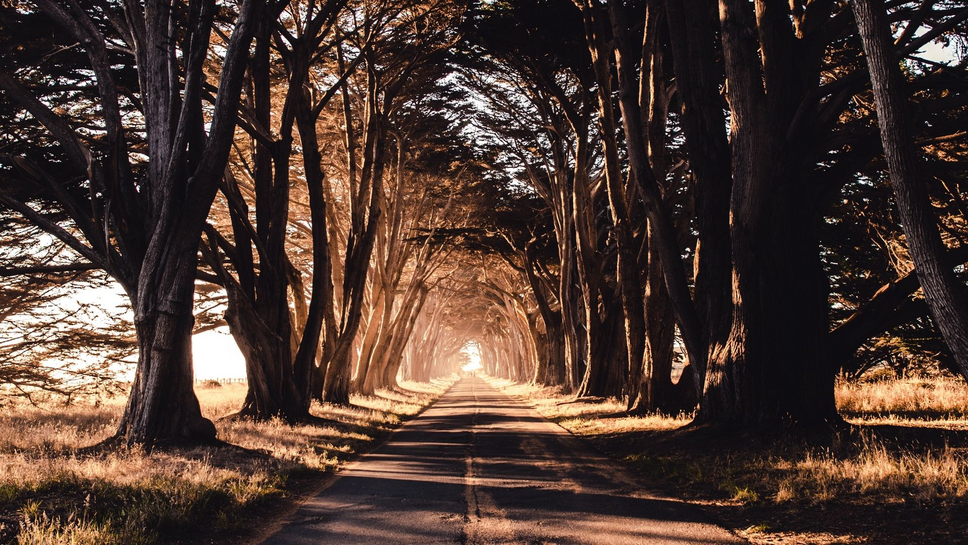 Download Wallpaper 1920x1080 Road Trees Shadow Full Hd Hdtv Fhd 1080p Hd Background Nature Wallpaper Backgrounds Desktop Background