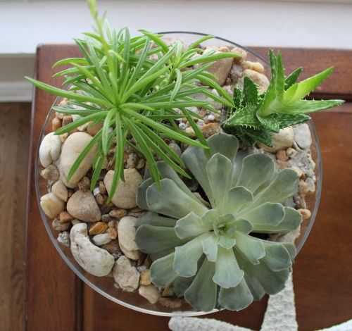 Succulents Planted In Glass Bowl With Rocks And Sand Succulents