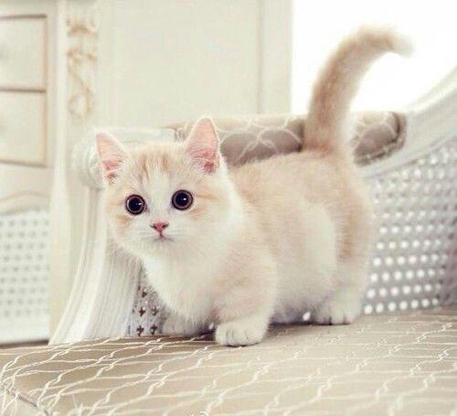 White Cat Cute Animals Cat Cats Adorable Animal Kittens Kitten