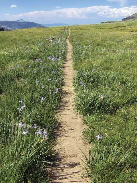 California - south of Upper Truckee River - Pacific Crest Trail Association - Ph...