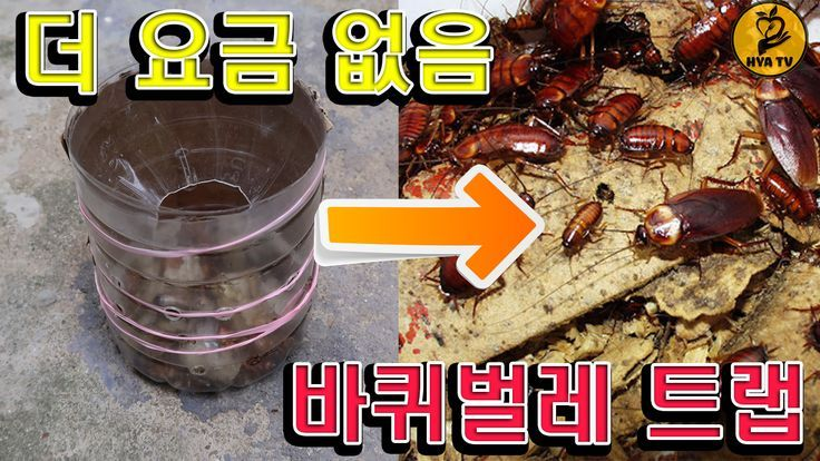 How to make a cockroach trap from a plastic bottle is very simple.  Caught a lot of cockroaches |  How to make…