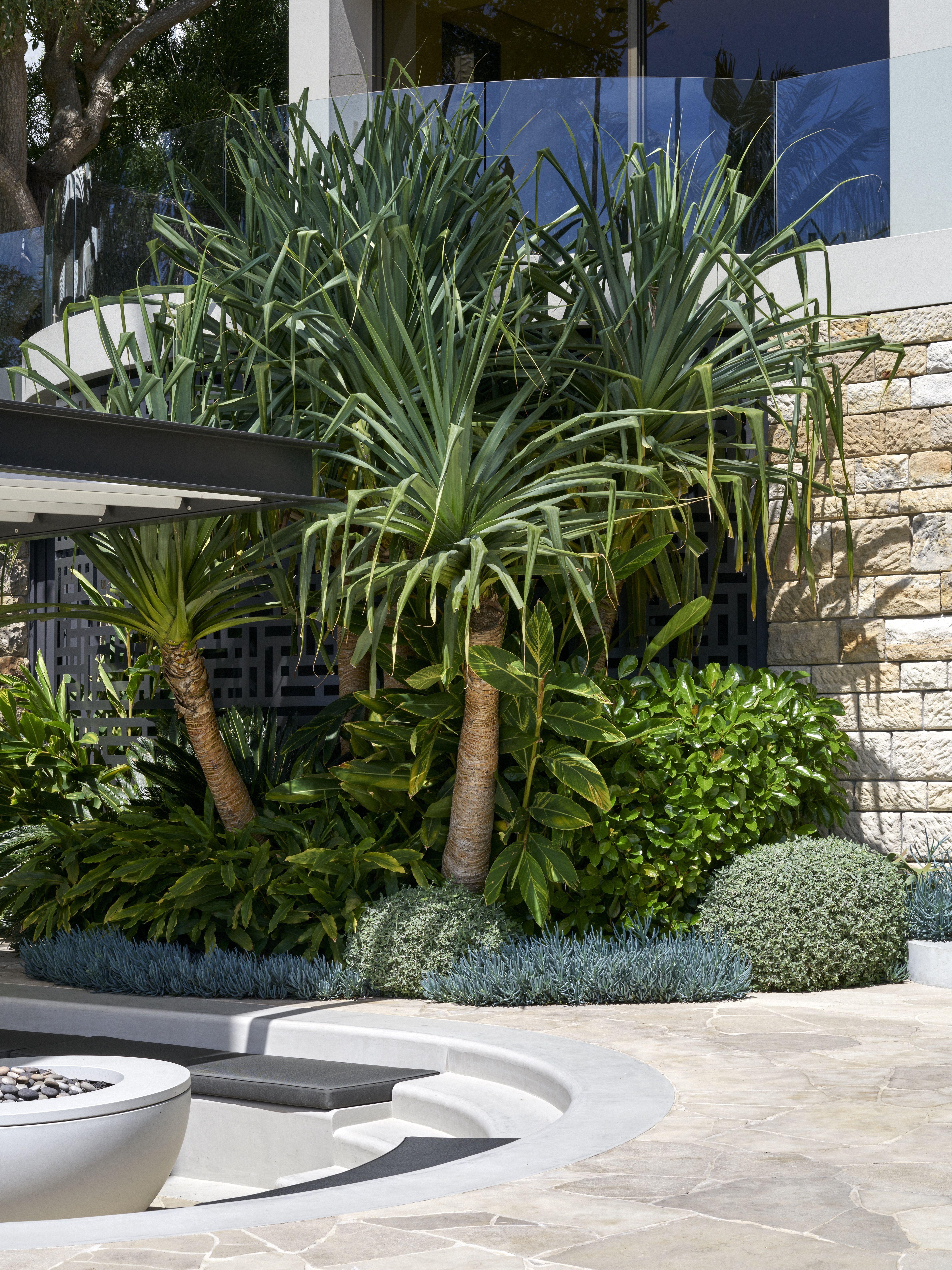 Projects | Myles Baldwin Design | Tropical garden design ...