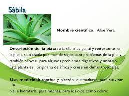 Plantas Medicinales Y Para Que Sirven Buscar Con Google Con