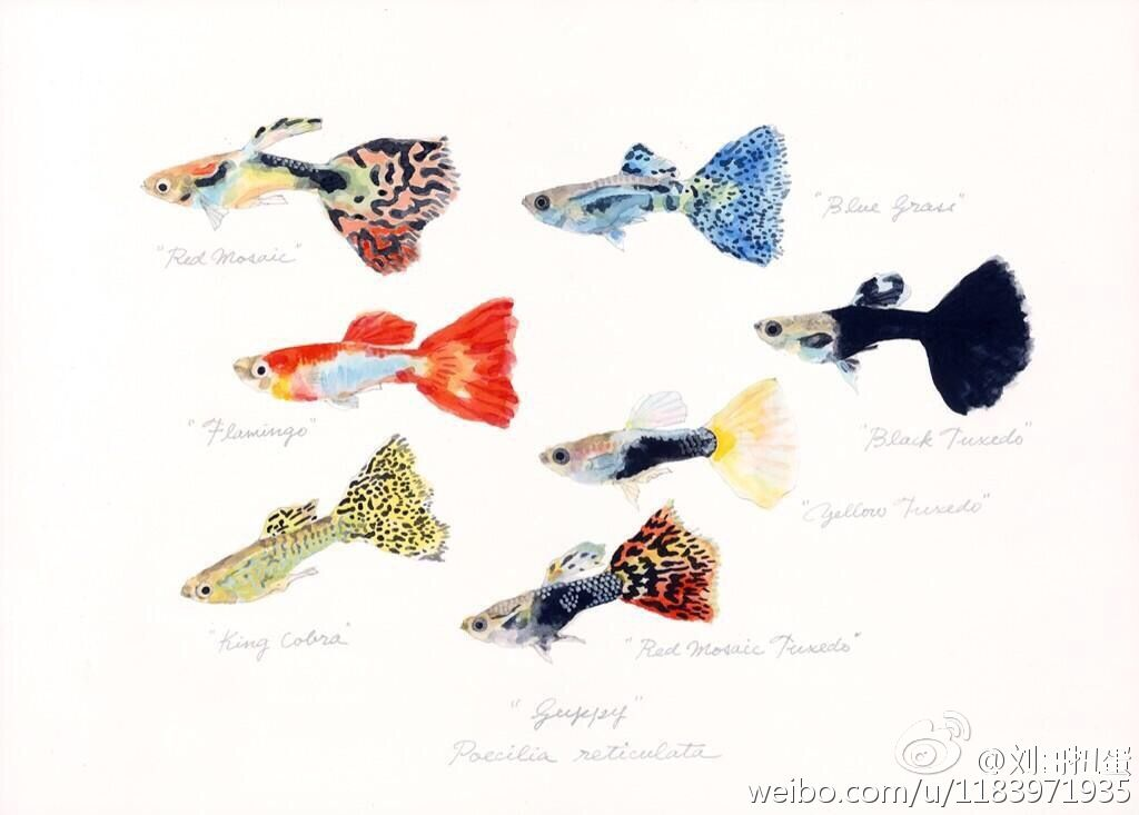 Sina Visitor System Fish Illustration Fish Drawings Watercolor Fish