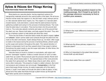 Cross Curricular Reading Comprehension Worksheets Answers Broken