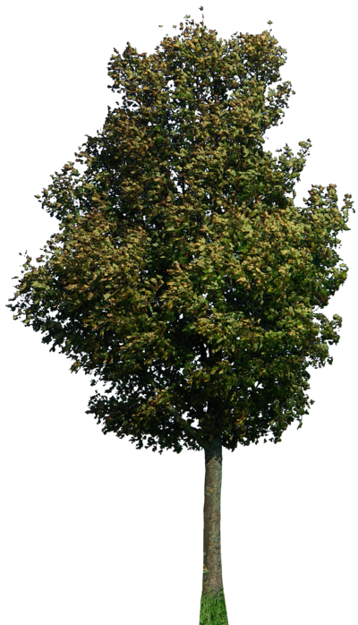 tree 42 png by gd08.deviantart.com on @deviantART | PSD ...