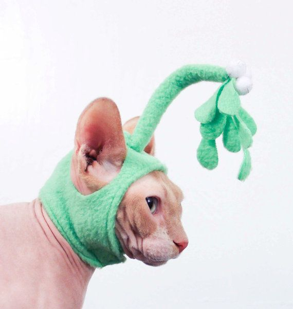 Mistletoe Hat for a cat Holiday pet hat Christmas pet costume kiss me Cat Hat Sphynx & Mistletoe Hat for a cat Holiday pet hat Christmas pet costume kiss ...