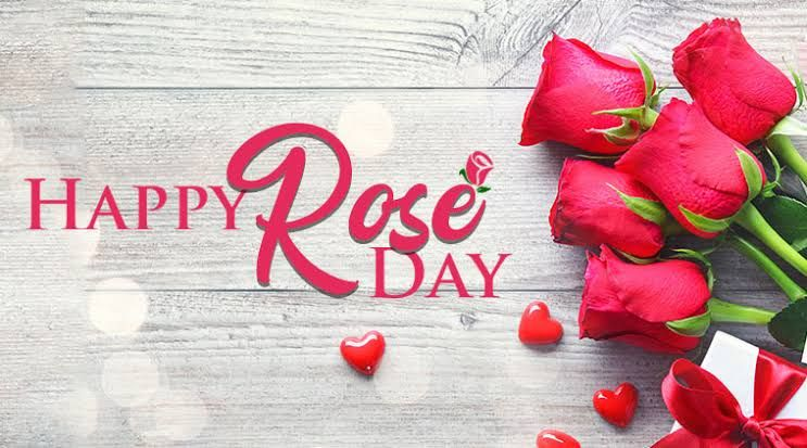 100 Rose Day Whatsapp Status 2020 Hd Images Download In 2020