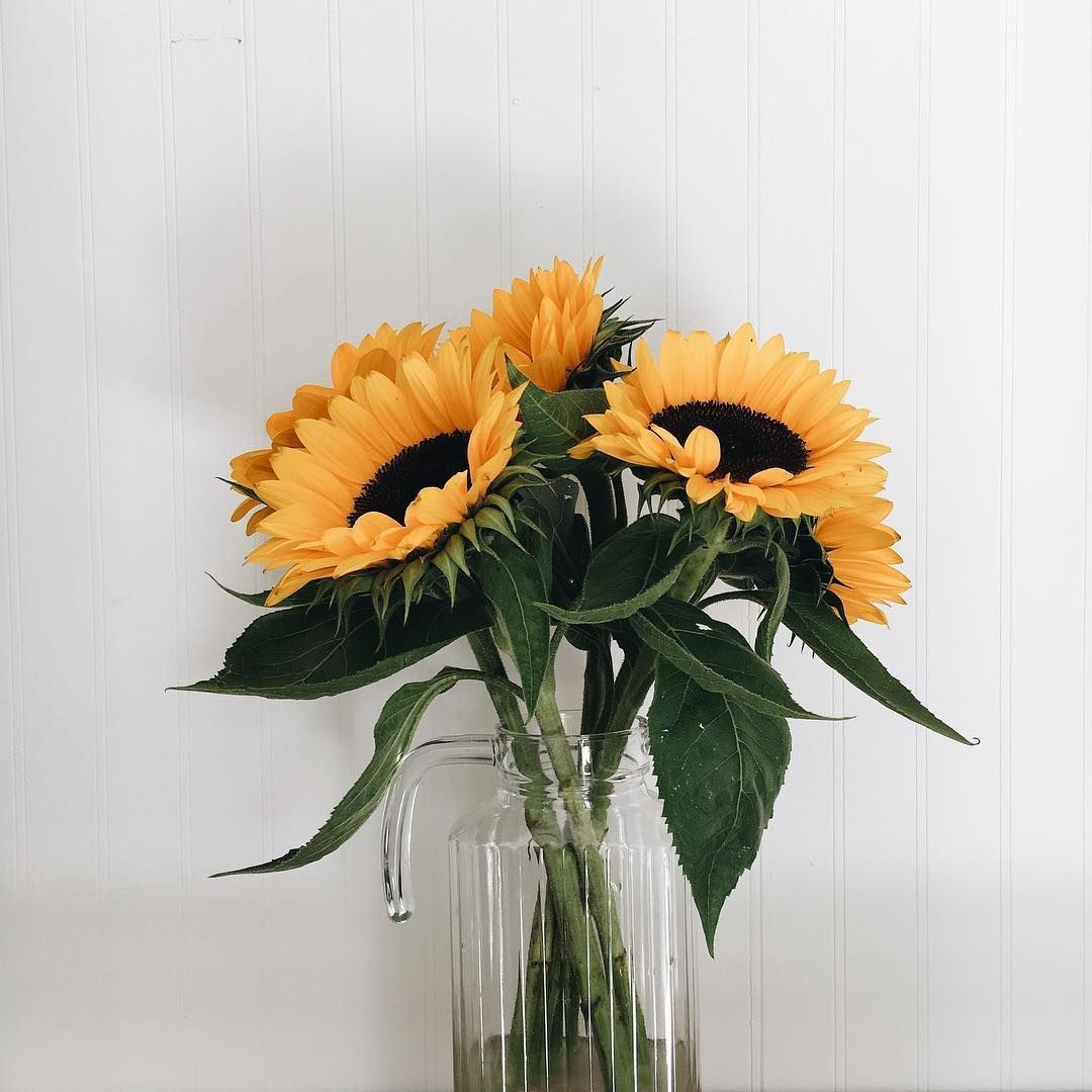 Pin By Viole Vidales On P E T A L S Plants Flower Aesthetic Sunflower Wallpaper