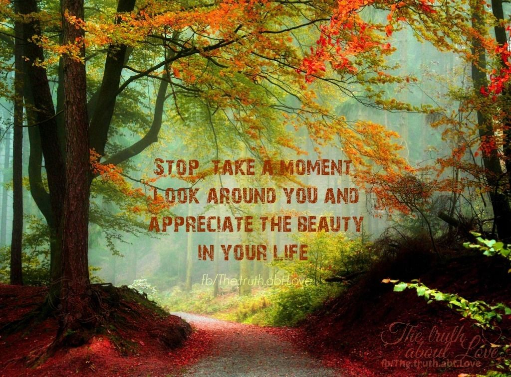 stop life quotes autumn inspirational quotes fall