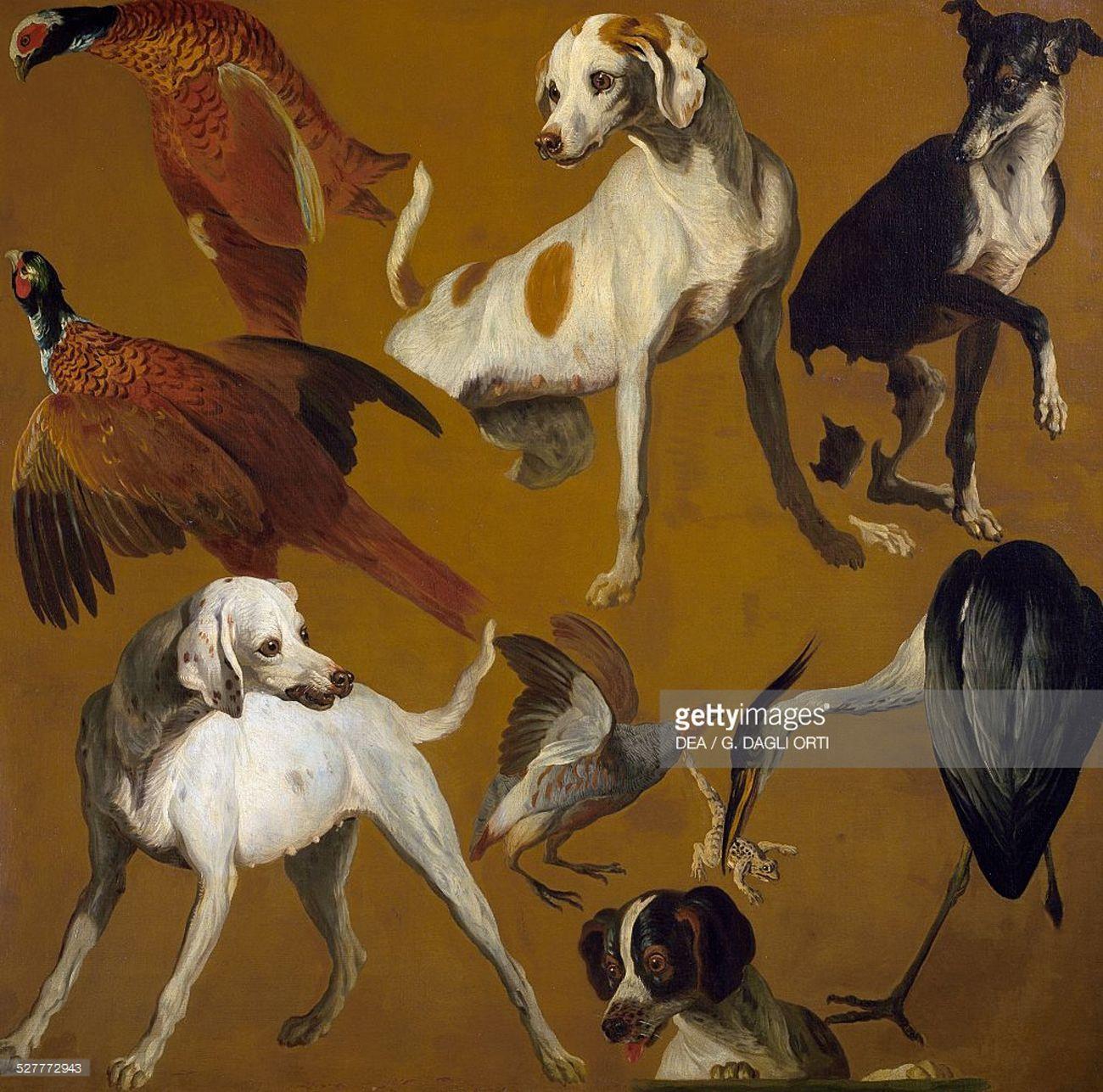 Alexandre-François Desportes - Study of birds and dogs.