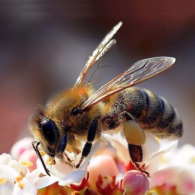 It S A Bee Autiful World Mit Bildern Bienenprodukte Bienen Insekten