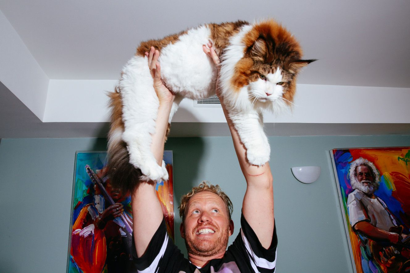 13-kilogram Samson - the largest cat in New York