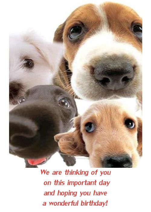 Dog Birthday Cards Facebook Happy Birthday Card With Dogs Cards