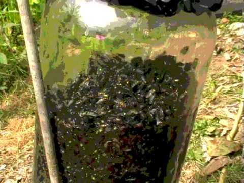 How to make a fly trap with what you have at home. Get rid