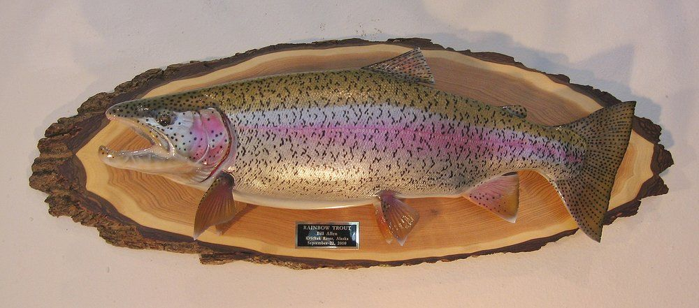 Rainbow Trout Fish Replica On Classic Oval Live Edge Panel Luke