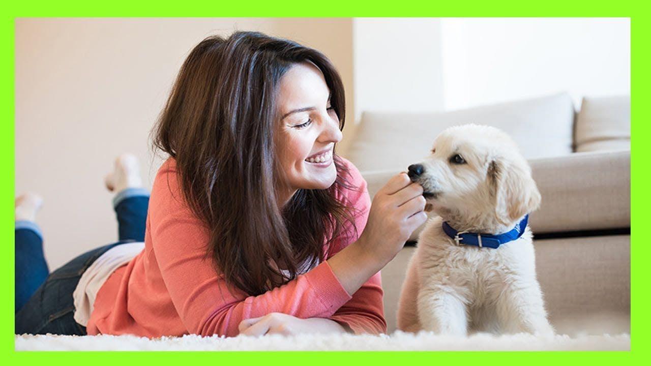Seis Razones Por Las Que Tener Un Perro Te Proporciona