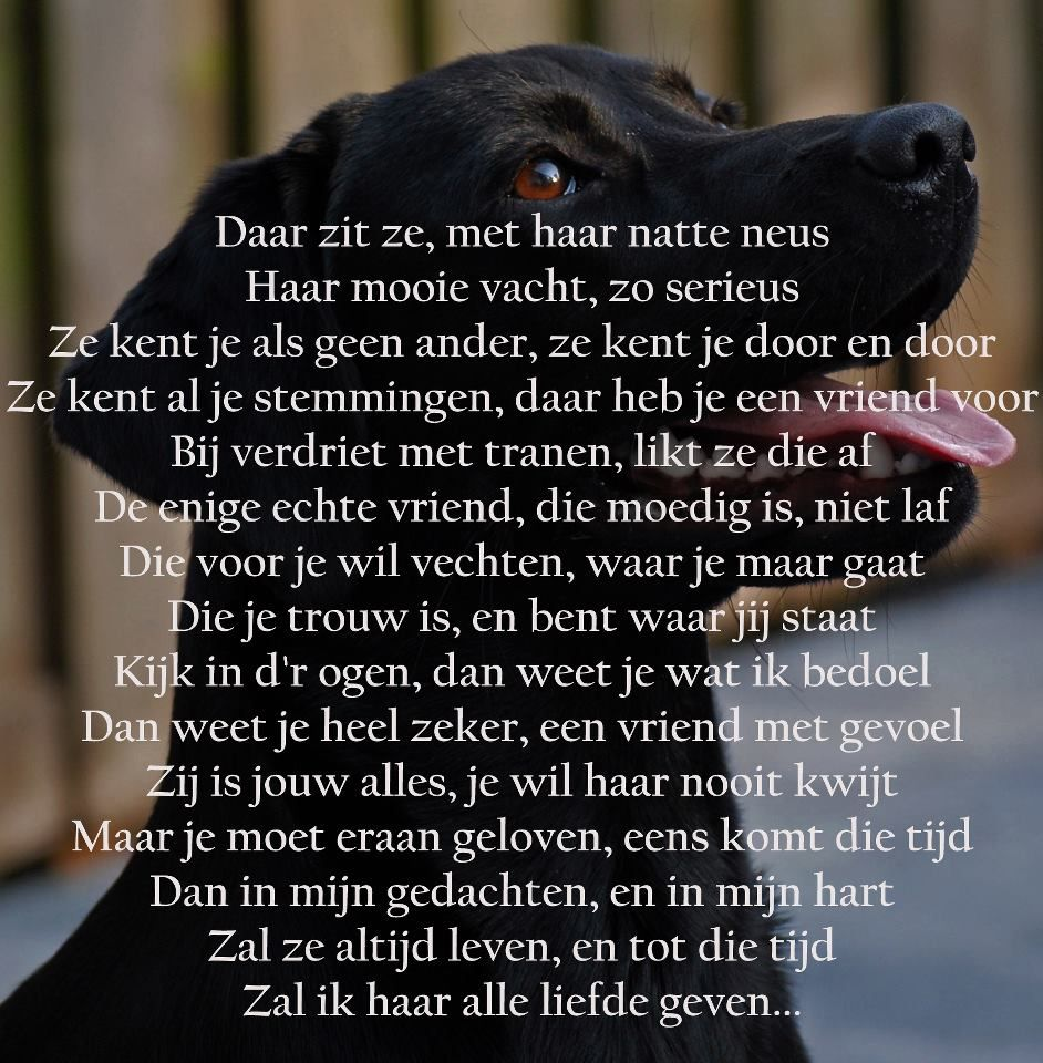 Zo Mooi Gedichten Dog Quotes Animal Quotes En Poems