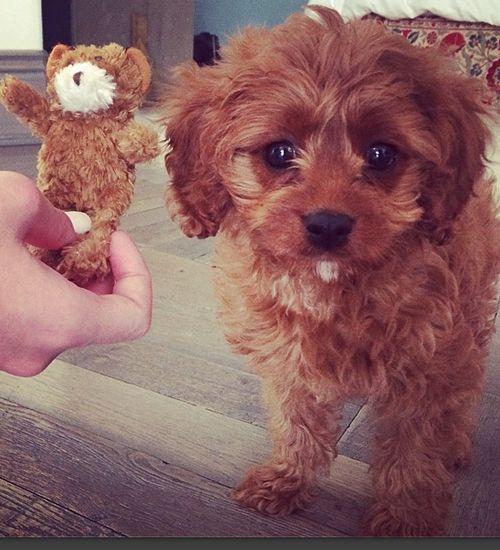 Katy Perry'in yeni köpeği Butters