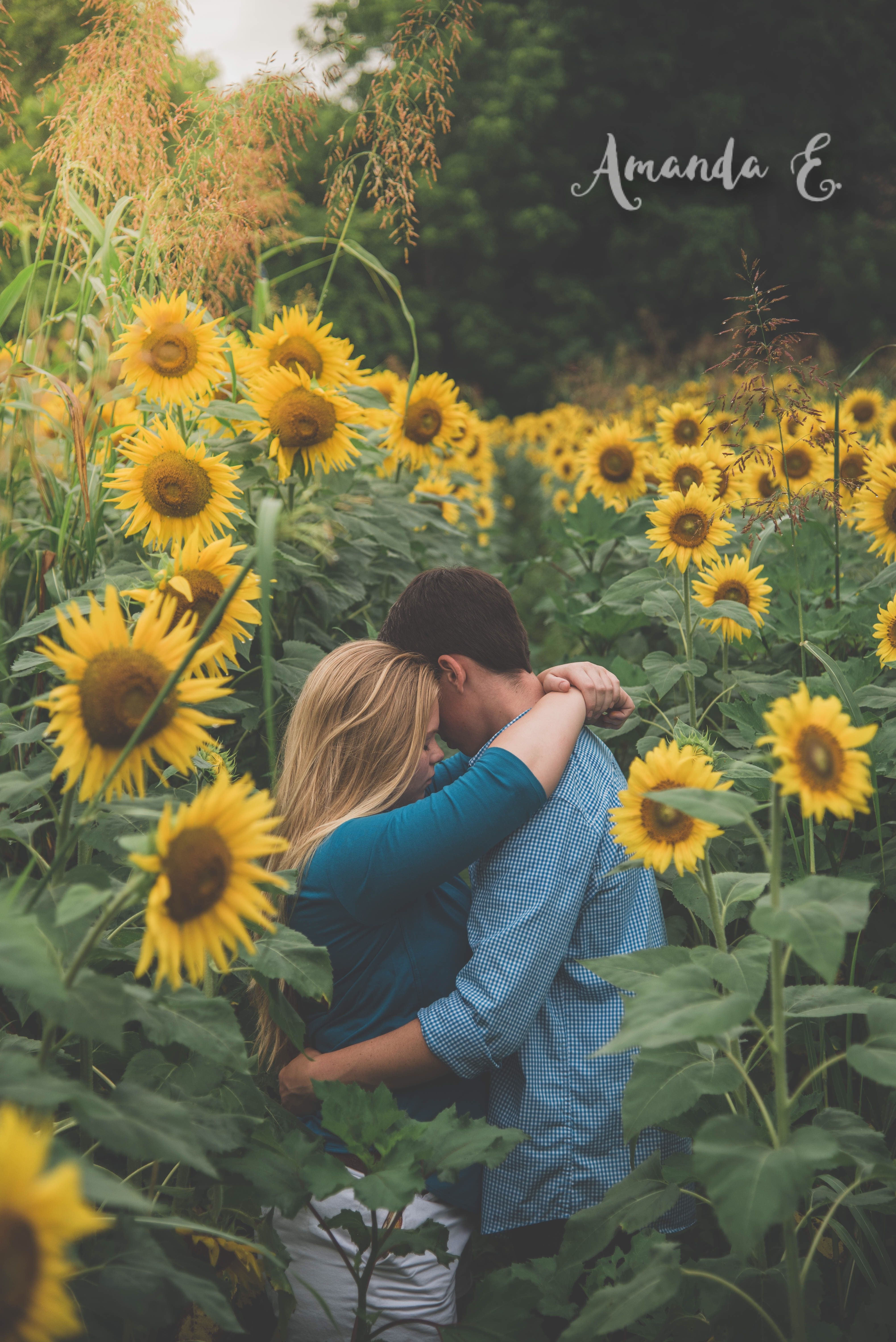 Sunflower Photoshoot | Sunflower photography