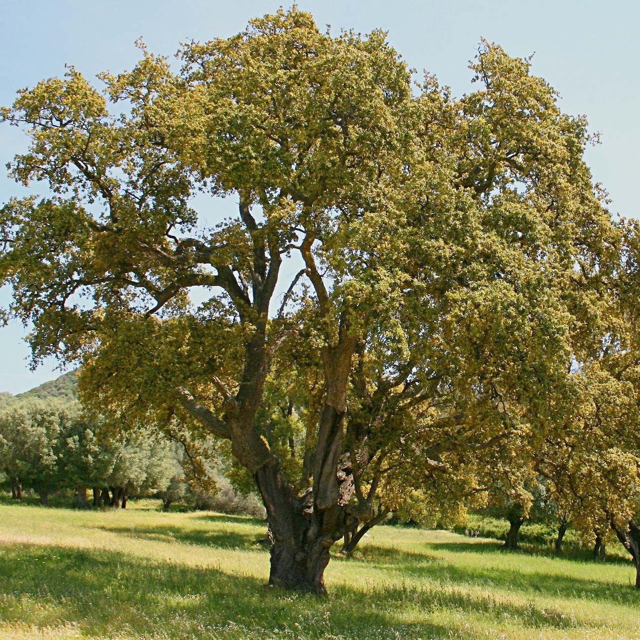 arbre forestier persistant
