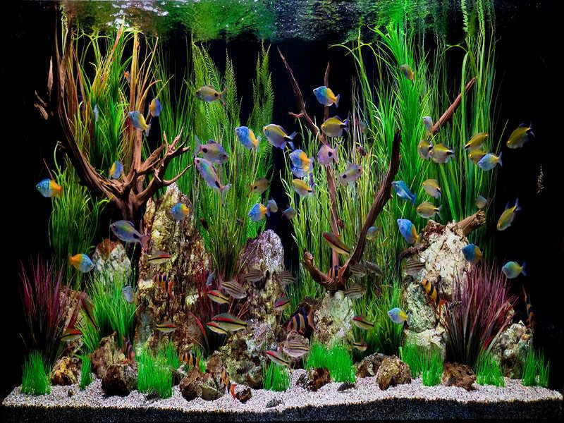 Decoration tropical fish aquarium decoration themes how to for Tall fish tank decorations