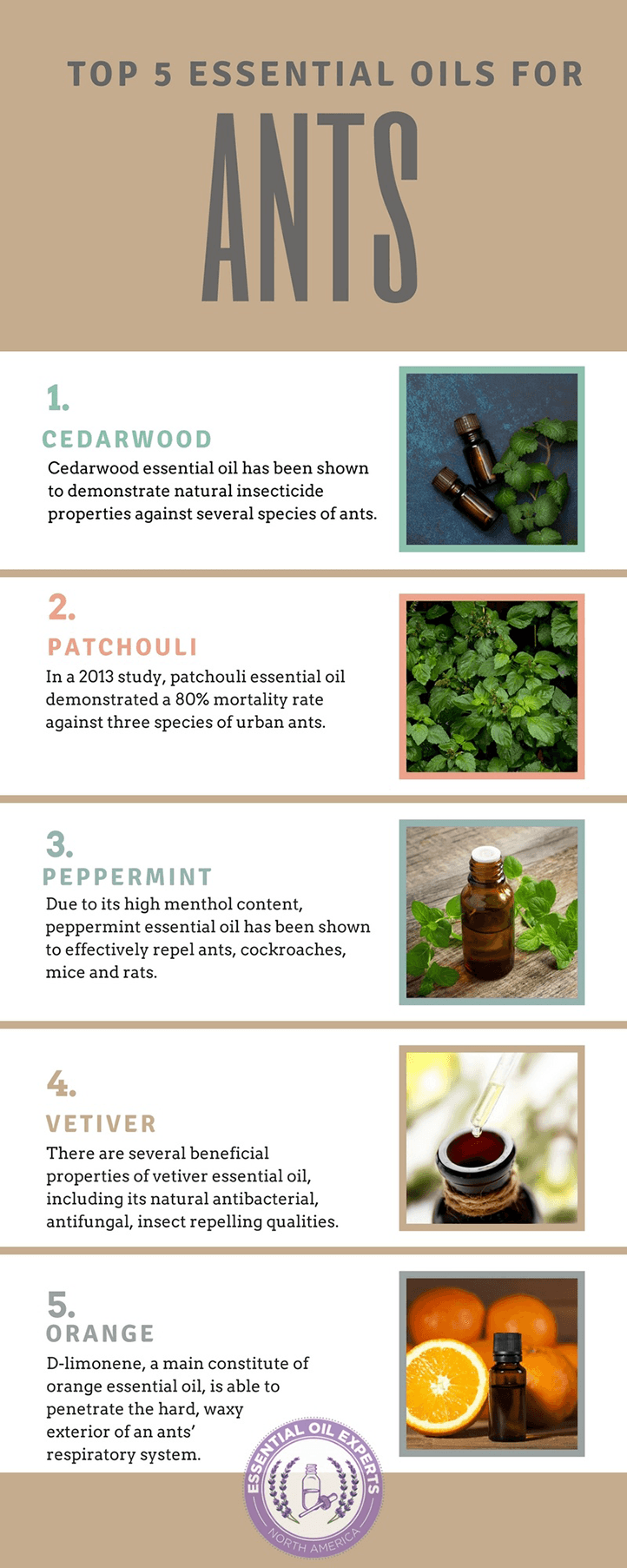 Essential Oils For Ants How To Get Rid Of Ants Naturally