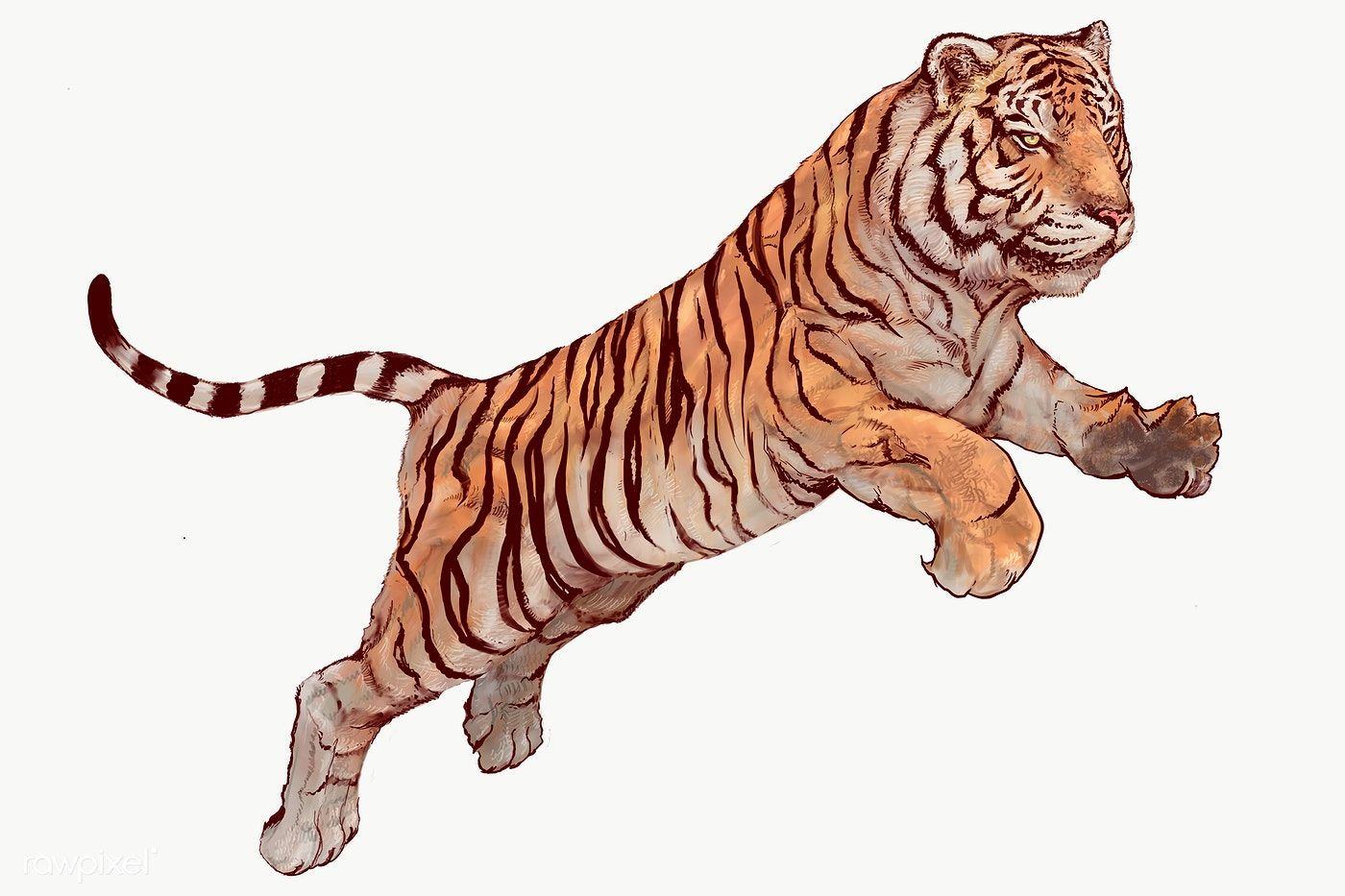 Download Premium Png Of Hand Drawn Jumping Tiger Overlay 2351187 Tiger Illustration How To Draw Hands Graphic Novel Illustration