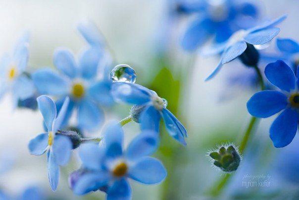 ZooFitoSfera животные и растения | Beautiful flowers ...