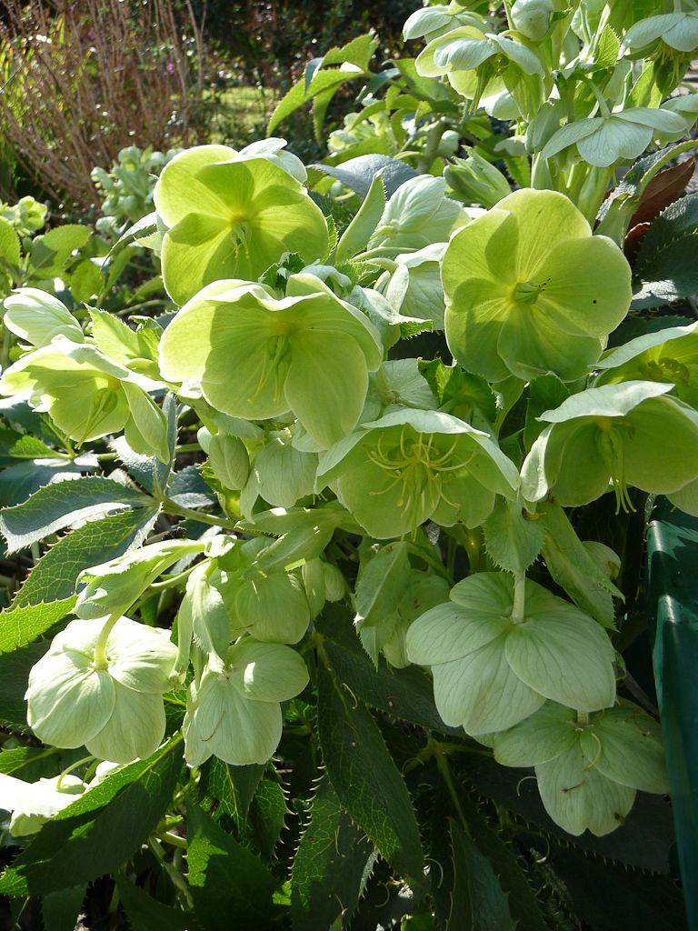 plante verte fleur verte