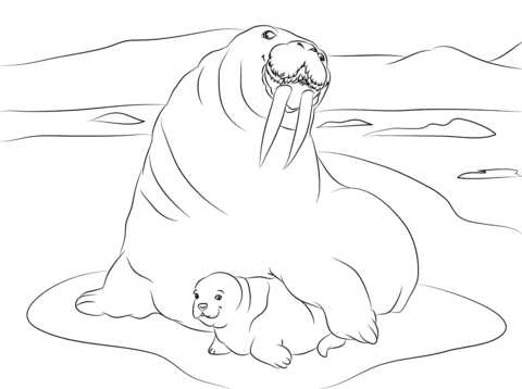 Walrus with Cute Baby Coloring page | DRAWINGS TO COLOUR | Pinterest ...
