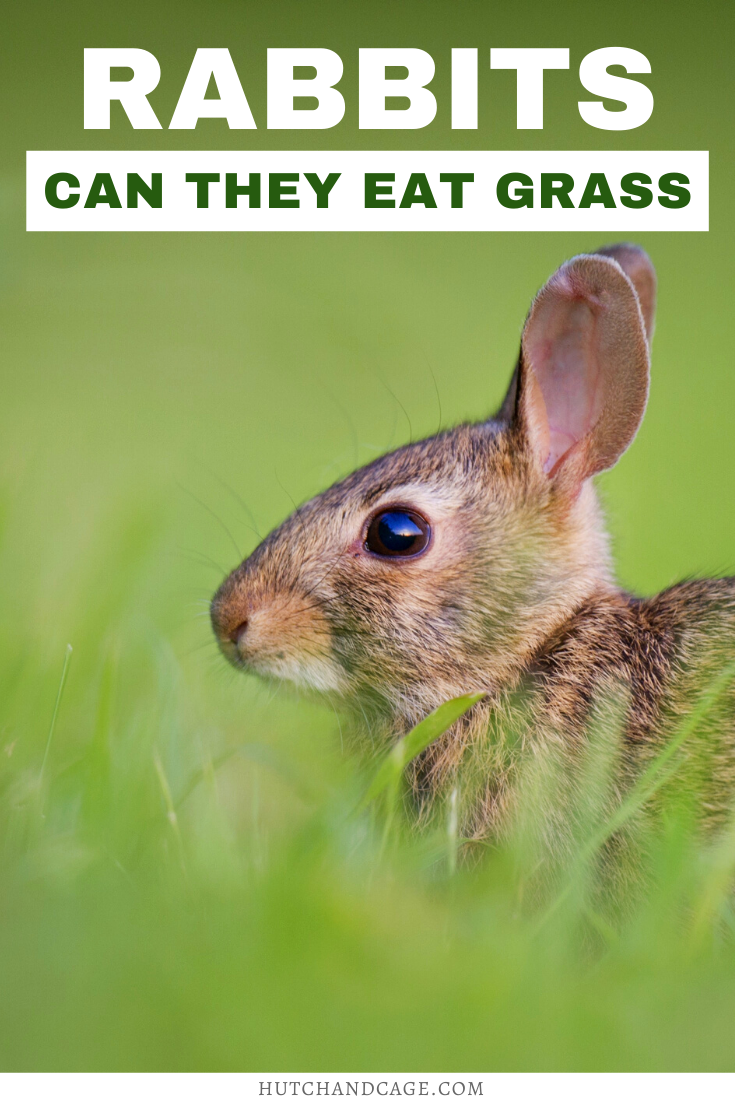Can Rabbits Eat Grass? in 2020 Rabbit resistant plants