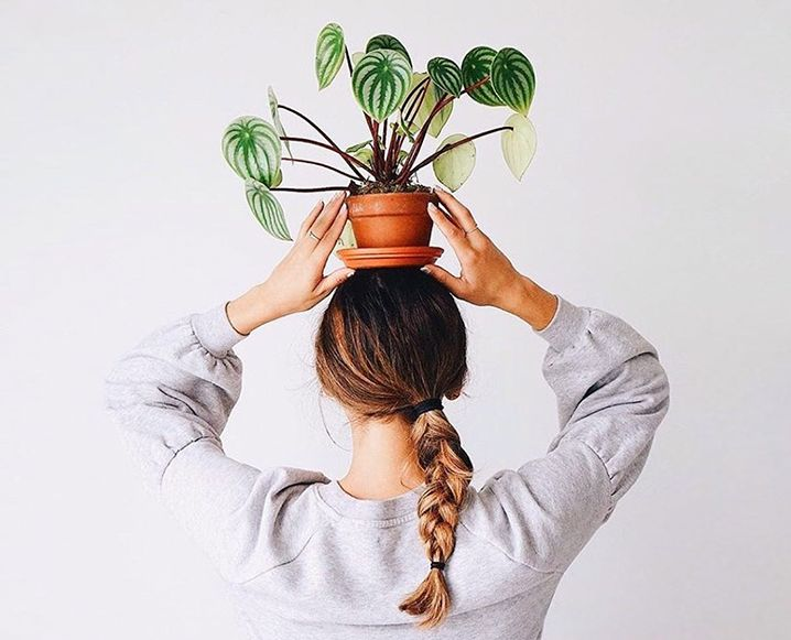 The 6 Best Plants To Keep In Your Bedroom For Better Sleep is part of bedroom Plants Oxygen - Did you know that some plants work the night shift  Here are the best plants to keep in your bedroom and how they can actually help you get better quality rest