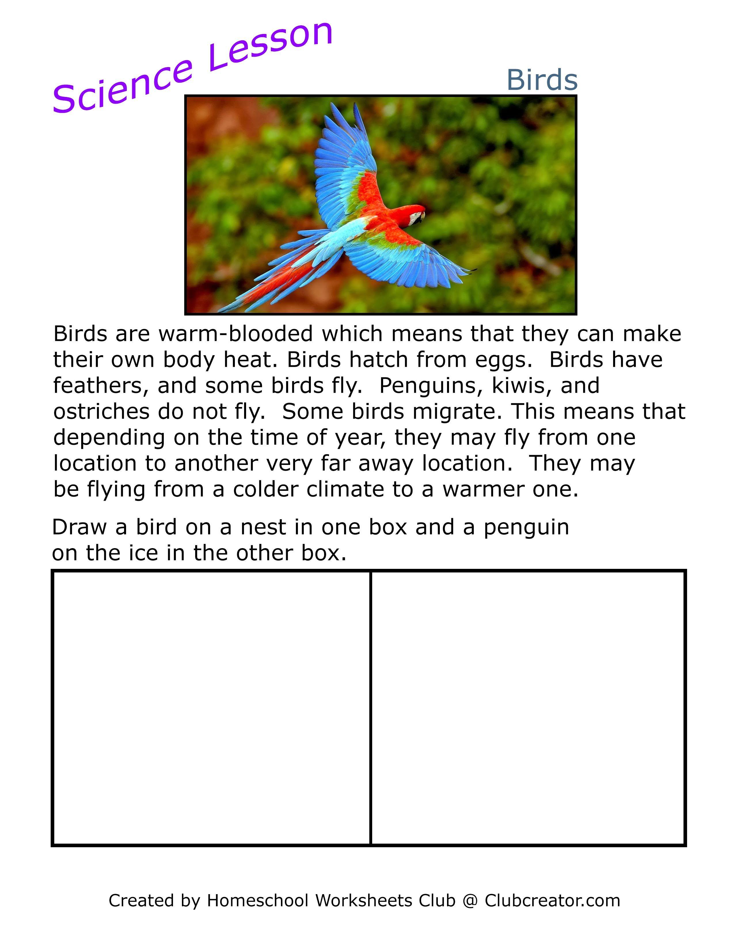 Science Worksheet Birds In 2020 Homeschool Worksheets Online Kindergarten Kindergarten Resources