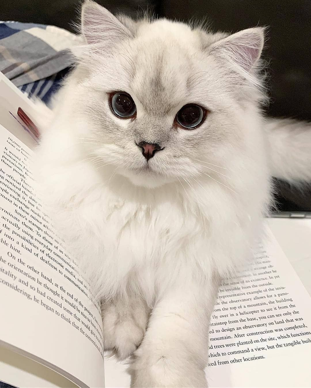 """Cute Cats Of Instagram on Instagram: """"The cutest bookmark ever❣ 📩 Submit your cat's photo to our contest email to be featured💕 ⠀⠀⠀⠀⠀⠀⠀⠀⠀ Notification ON 💙  #kittens_of_world and…"""""""